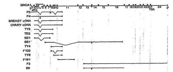 Australian Gene Patent