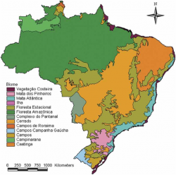 Transgenic Corn in Brazil, GMOs