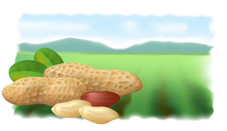 Image of peanuts against background of field